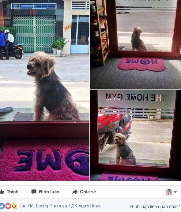 Xúc động nhất Facebook hôm nay: Chú chó ở Đồng Nai quay về tìm chủ cũ sau 3 năm bị bắt đi - Ảnh 1.