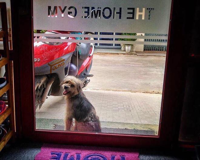 Xúc động nhất Facebook hôm nay: Chú chó ở Đồng Nai quay về tìm chủ cũ sau 3 năm bị bắt đi - Ảnh 2.