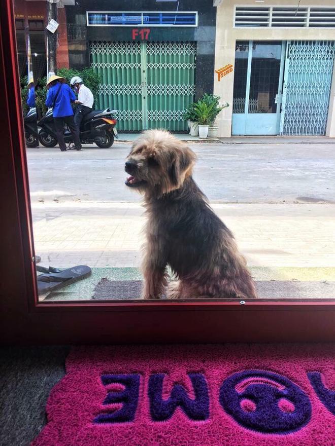 Xúc động nhất Facebook hôm nay: Chú chó ở Đồng Nai quay về tìm chủ cũ sau 3 năm bị bắt đi - Ảnh 3.