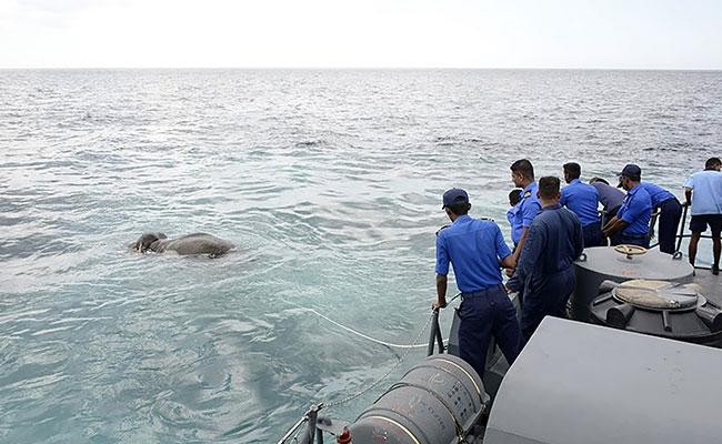 Chuyện hy hữu: Bị trôi lạc ra biển 15km, chú voi rừng may mắn được hải quân cứu sống - Ảnh 2.