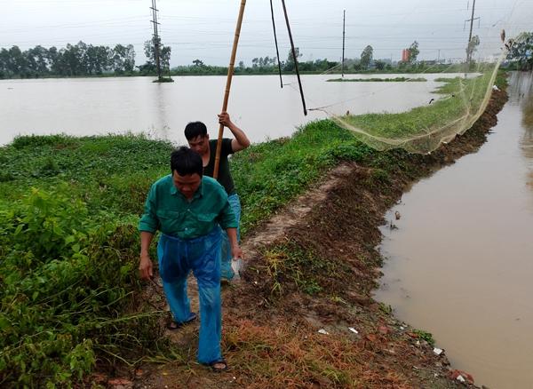 Sau mưa bão, người Hà Nội cất vó đánh cá cạnh các Khu đô thị mới - Ảnh 2.