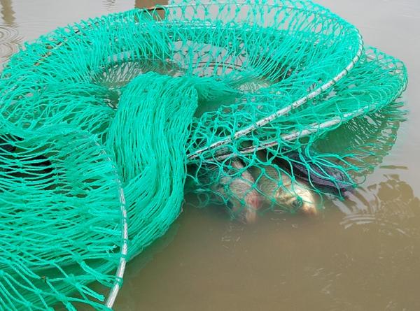 Sau mưa bão, người Hà Nội cất vó đánh cá cạnh các Khu đô thị mới - Ảnh 7.