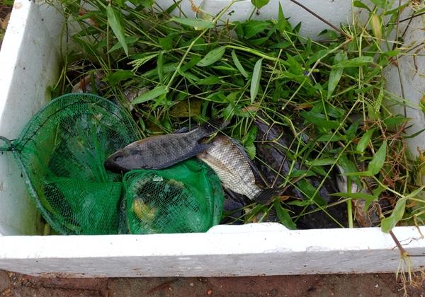 Sau mưa bão, người Hà Nội cất vó đánh cá cạnh các Khu đô thị mới - Ảnh 13.