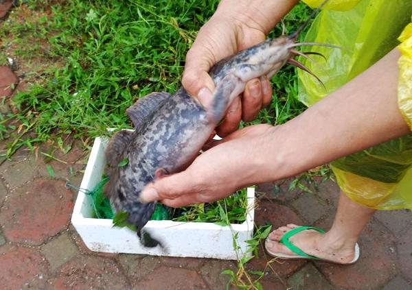 Sau mưa bão, người Hà Nội cất vó đánh cá cạnh các Khu đô thị mới - Ảnh 14.