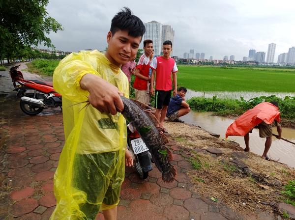 Sau mưa bão, người Hà Nội cất vó đánh cá cạnh các Khu đô thị mới - Ảnh 15.