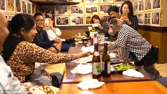 Fukuchan phục vụ ở nhà hàng Nhật.