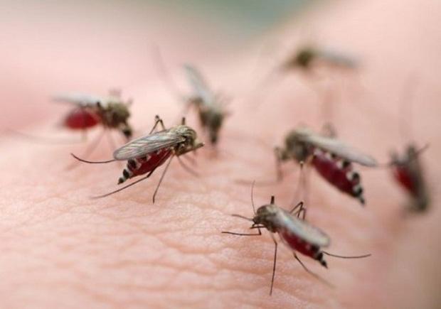 Đây là 2 thời điểm trong ngày bạn cần phải chú ý nhất khi dịch sốt xuất huyết đang báo động đỏ như hiện nay - Ảnh 1.