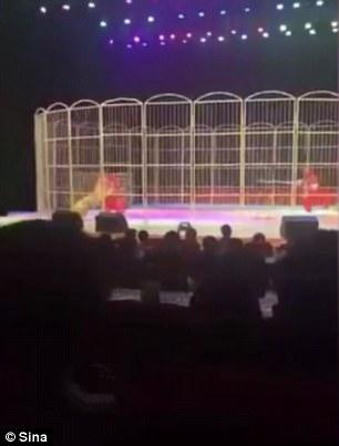 Khoảnh khắc con hổ vồ huấn luyện viên xiếc trên sân khấu ở Trung Quốc (Ảnh: Sina)