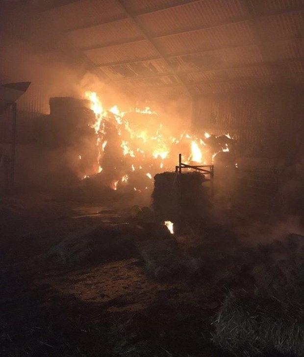 20 chú lợn được cứu khỏi đám cháy, nửa năm sau lại bị đem làm xúc xích để tỏ lòng cảm ơn đội cứu hỏa - Ảnh 1.
