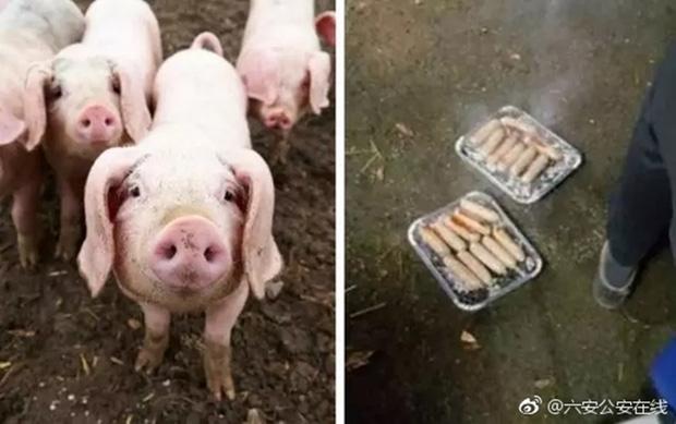 20 chú lợn được cứu khỏi đám cháy, nửa năm sau lại bị đem làm xúc xích để tỏ lòng cảm ơn đội cứu hỏa - Ảnh 3.