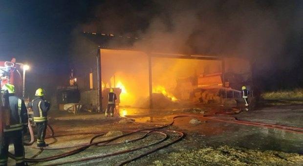20 chú lợn được cứu khỏi đám cháy, nửa năm sau lại bị đem làm xúc xích để tỏ lòng cảm ơn đội cứu hỏa - Ảnh 4.
