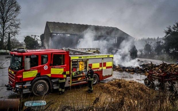 20 chú lợn được cứu khỏi đám cháy, nửa năm sau lại bị đem làm xúc xích để tỏ lòng cảm ơn đội cứu hỏa - Ảnh 6.