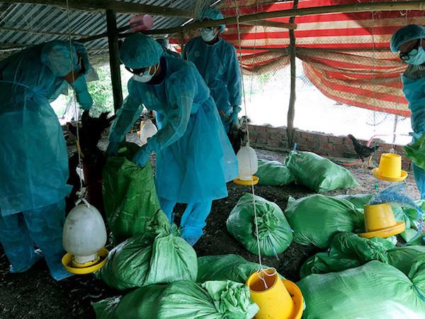 Phát hiện ổ dịch cúm gia cầm H5N1 ở Bạc Liêu