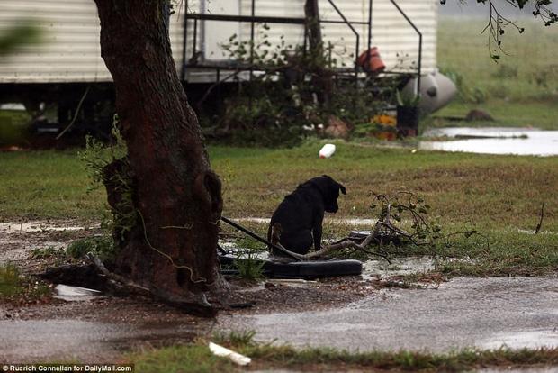 Hình ảnh những chú chó bơ vơ, ngập giữa dòng nước lớn trong trận bão mạnh nhất thập kỷ ở Mỹ khiến nhiều người động lòng - Ảnh 2.