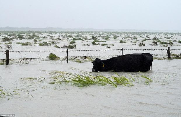 Hình ảnh những chú chó bơ vơ, ngập giữa dòng nước lớn trong trận bão mạnh nhất thập kỷ ở Mỹ khiến nhiều người động lòng - Ảnh 3.