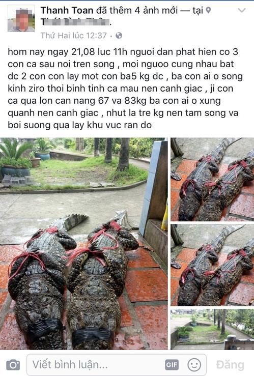'Bắt được cá sấu 83 kg trên kênh Zero' là tin thất thiệt  - ảnh 1