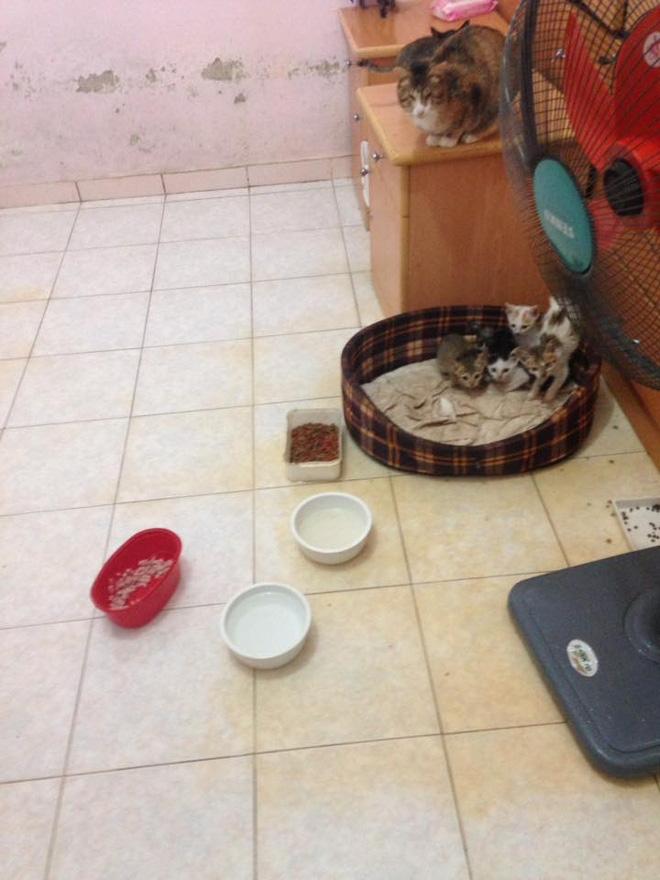 Cuộc đời buồn của cụ bà 80 tuổi đi ăn xin để chăm sóc chó, mèo hoang - Ảnh 3.