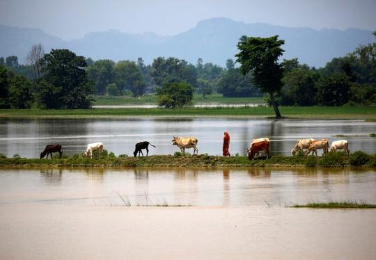 Lũ lụt tàn phá Nam Á, hơn 1.200 người thiệt mạng - Ảnh 7.