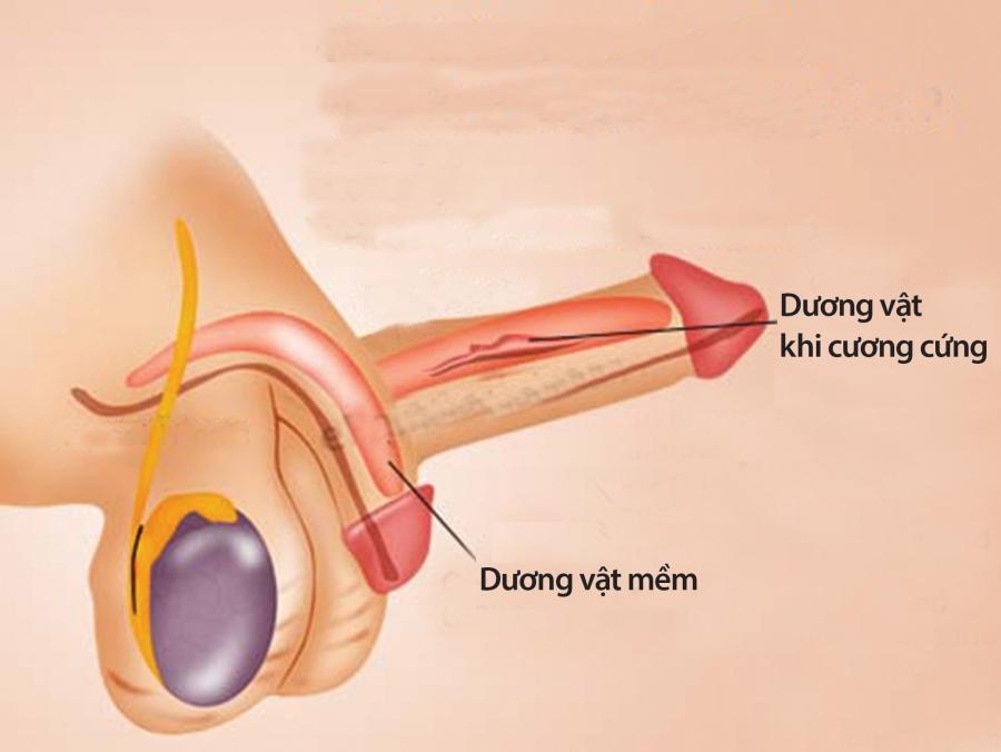 Nhận diện rối loạn hoạt động tình dục ở nam giới