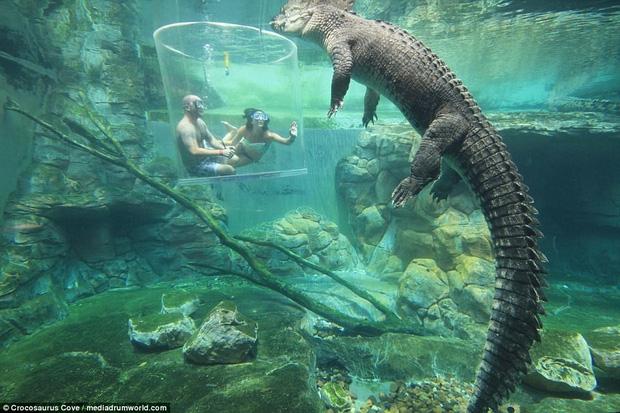 Nhiều du khách chi tiền triệu để trải nghiệm cảm giác mạnh, đối mặt với cá sấu ăn thịt người dài 5m - Ảnh 4.