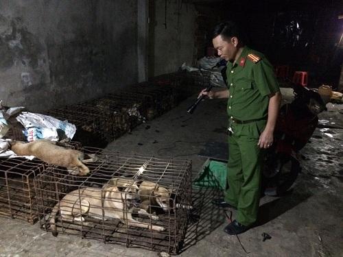 Nhiều con chó bị các đối tượng bắt trộm đem đến tại nhà đầu nậu.