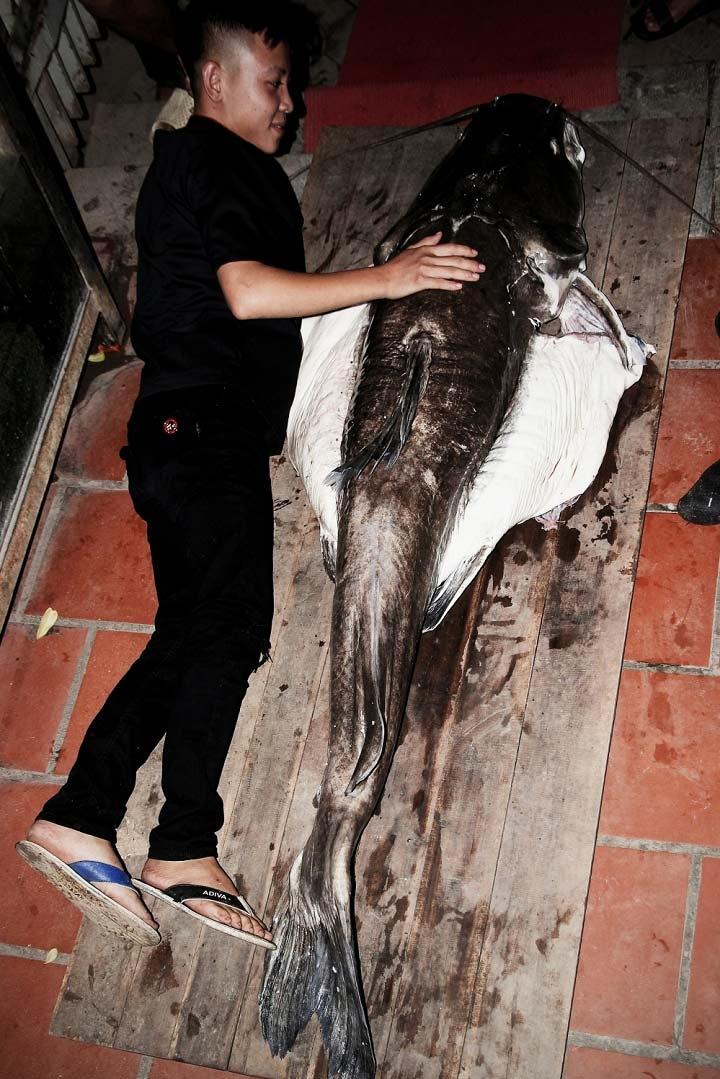 cá lăng, cá khủng, thủy quái, đặc sản