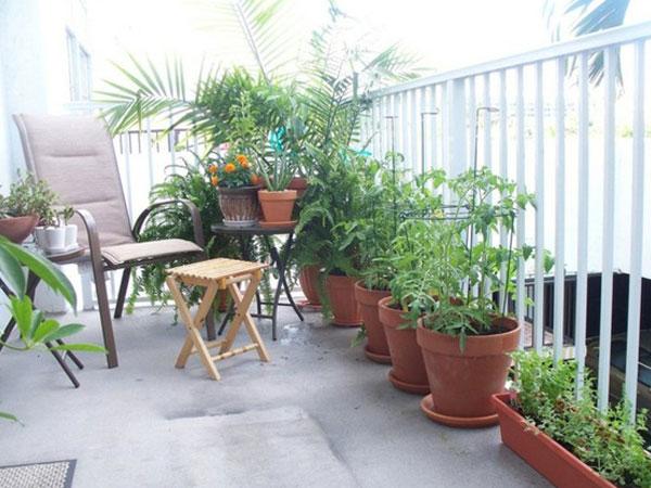 Muốn trồng cây ở ban công vừa đẹp vừa hút tài lộc, phải biết những điều này