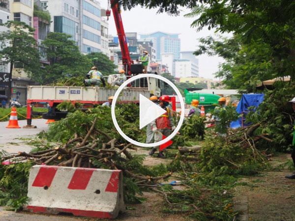 Video: Hà Nội bắt đầu đánh chuyển, chặt hạ 130 cây xanh dọc đường Kim Mã