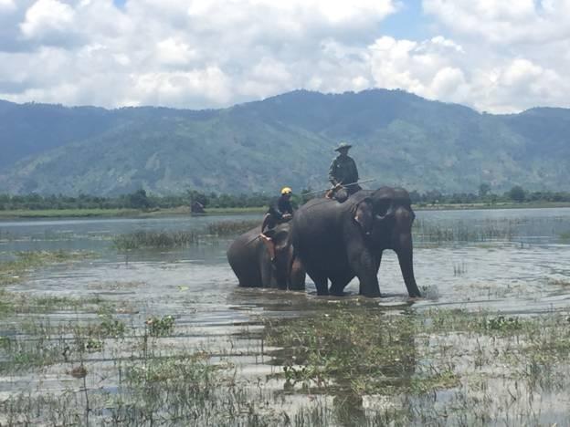"""Để chuẩn bị cho voi sinh con, voi cái được thuê hẳn một """"bảo mẫu"""" (ảnh V.T)"""
