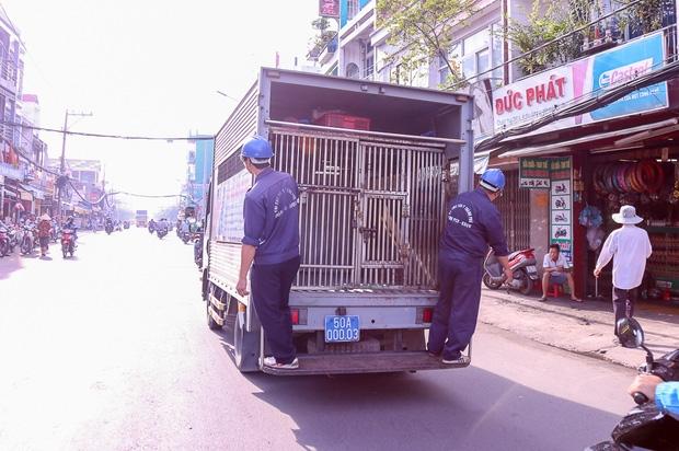 """Clip: Tiếp tục ra quân bắt chó thả rông ở Sài Gòn, nhiều chó nhà bị Đội săn bắt """"tóm"""" khiến chủ ngơ ngác - Ảnh 2."""