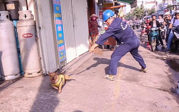 """Clip: Tiếp tục ra quân bắt chó thả rông ở Sài Gòn, nhiều chó nhà bị Đội săn bắt """"tóm"""" khiến chủ ngơ ngác - Ảnh 4."""