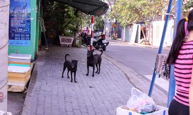 """Clip: Tiếp tục ra quân bắt chó thả rông ở Sài Gòn, nhiều chó nhà bị Đội săn bắt """"tóm"""" khiến chủ ngơ ngác - Ảnh 12."""