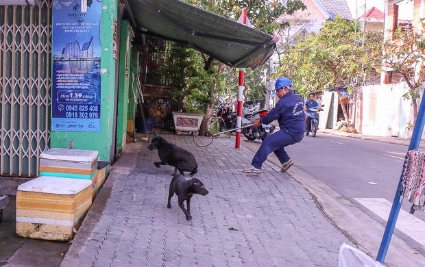 """Clip: Tiếp tục ra quân bắt chó thả rông ở Sài Gòn, nhiều chó nhà bị Đội săn bắt """"tóm"""" khiến chủ ngơ ngác - Ảnh 13."""