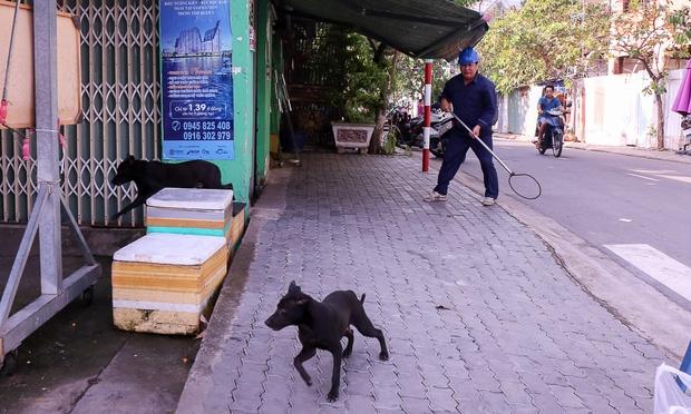 """Clip: Tiếp tục ra quân bắt chó thả rông ở Sài Gòn, nhiều chó nhà bị Đội săn bắt """"tóm"""" khiến chủ ngơ ngác - Ảnh 14."""
