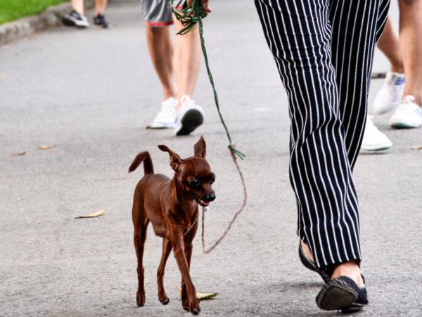 """Ảnh: Chó nuôi """"tung hoành"""" phố phường Hà Nội trước luật cấm mới"""