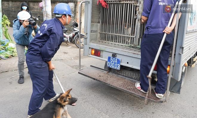"""Chó cưng bị Đội săn bắt """"tóm"""", cụ bà hớt hải: """"Nó đi chợ với tôi, đang nằm trên vỉa hè chờ tôi về cùng thì bị bắt"""" - Ảnh 2."""