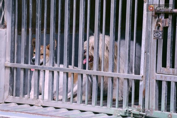 Chó cưng bị Đội săn bắt tóm, cụ bà hớt hải: Nó đi chợ với tôi, đang nằm trên vỉa hè chờ tôi về cùng thì bị bắt - Ảnh 7.