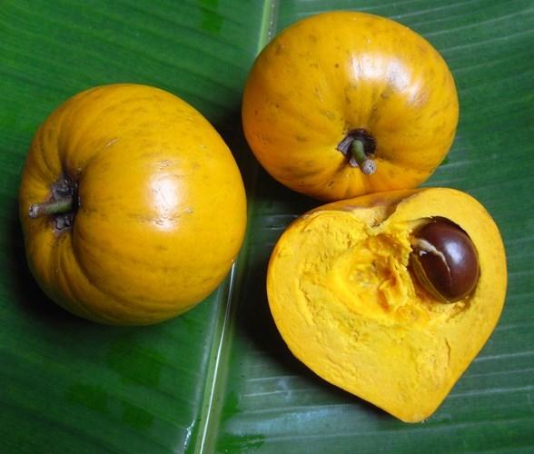 Tại Việt Nam, quả trứng gà (lê ki ma) lại để rụng và được nhiêu người cho rằng, không có giá trị kinh tế - Ảnh Người nhà quê.