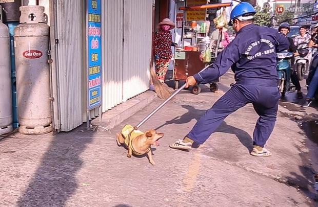 Xuất hiện thông tin bịa đặt Xe bắt chó giả ở TP HCM khiến nhiều người hoang mang - Ảnh 1.