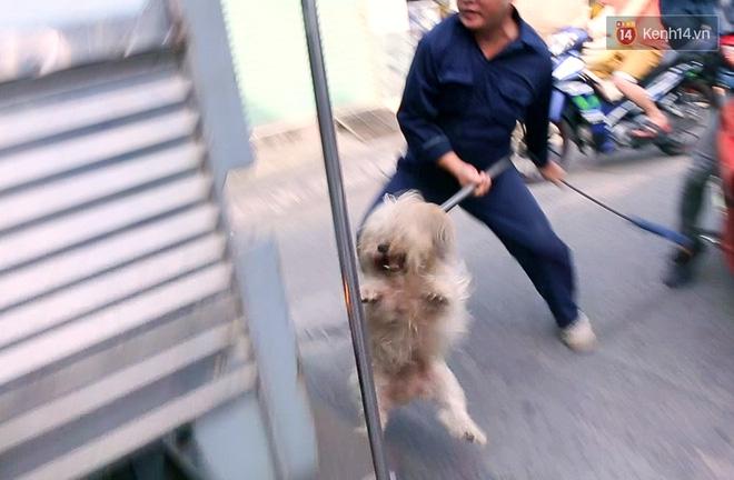 """Xuất hiện thông tin bịa đặt """"Xe bắt chó giả ở TP HCM"""" khiến nhiều người hoang mang - Ảnh 6."""