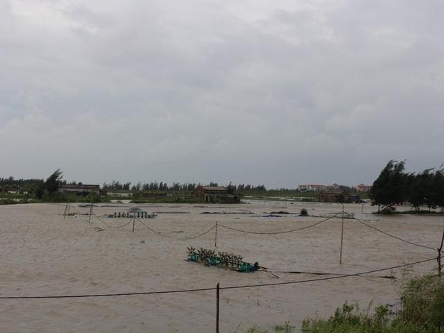Nhiều diện tích nuôi tôm, ngao bị ngập nước mất trắng