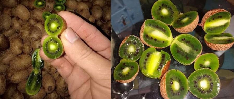 kiwi berry, hoa quả độc lạ, hoa quả nhập khẩu, hoa quả nhập ngoại, hoa quả cao cấp, quả lạ