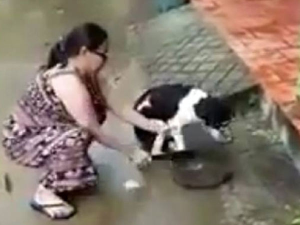 Clip nóng nhất ngày: Phẫn nộ người phụ nữ dùng dao chặt chân chú chó dã man