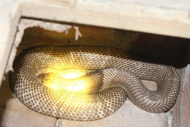 """Nói về nghề truyền thống của làng Lệ Mật, ông Pháo chậm rãi cất lời: """"Người làng này giỏi lắm, chỉ cần nhìn vào hang trên bờ ruộng là biết đâu là hang rắn, đâu là hang cua, hang chuột. Chúng tôi từ ngày còn trẻ ai cũng được truyền dạy kinh nghiệm qua câu ca: Lỗ ếch thì nhẵn hai bên, nhẵn dưới là rắn, nhẵn trên là cầy. Ngày bé, sau mỗi buổi bắt rắn, tôi lại mang lồng, bị cói... đi bán khắp phố phường""""."""