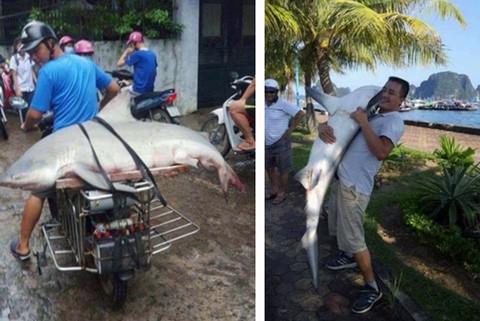 Người câu được cá mập ở vịnh Hạ Long: Phải ghì chặt và mất 2 giờ đưa cá lên thuyền - Ảnh 1.