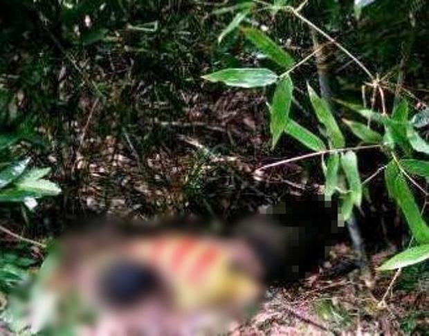 Phát hiện thi thể nam thanh niên nằm sấp trong bụi cây, nghi ăn lá ngón tự tử - Ảnh 1.