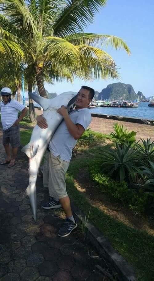 Hình ảnh cá nghi là cá nhám hoặc cá mập, được cho là chụp ở Vịnh Hạ Long (ảnh Facebook)