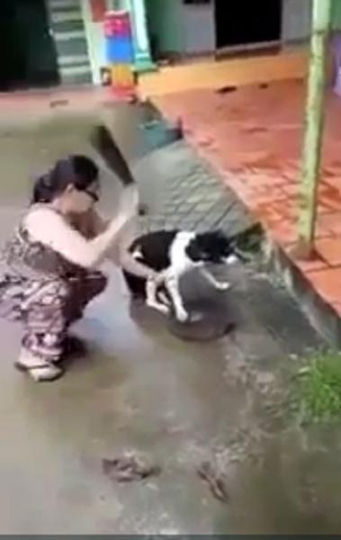 chặt chân chó