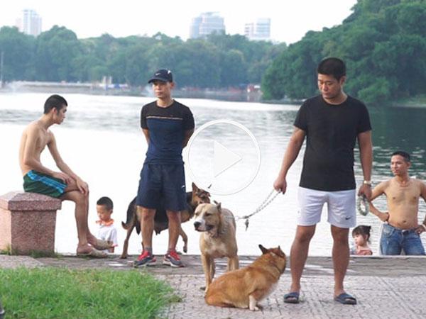 Chó không rọ mõm, thả rông khắp công viên, đường phố Hà Nội