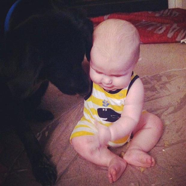 Chú chó cứ gặp người giữ trẻ là cực kì hung dữ, chủ nhà lén đặt máy ghi âm và phát hiện sự thật đau lòng - Ảnh 1.